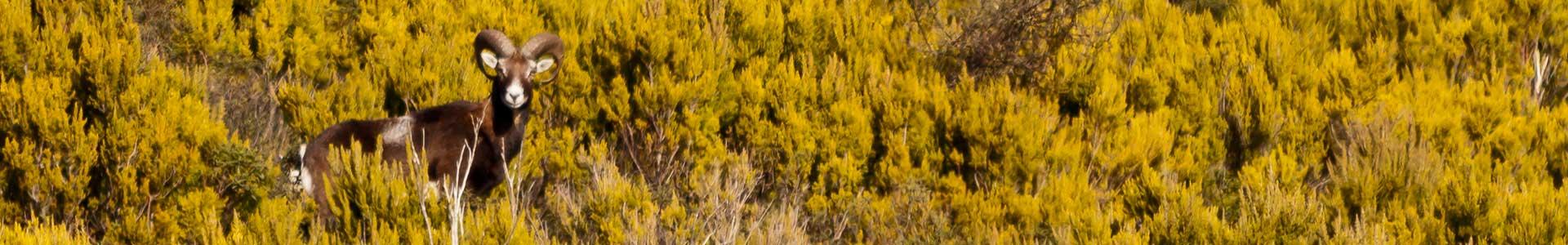 guide ambientali arcipelago toscano