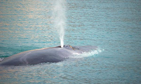 monitoraggio dei cetacei